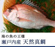 瀬戸内産 天然真鯛