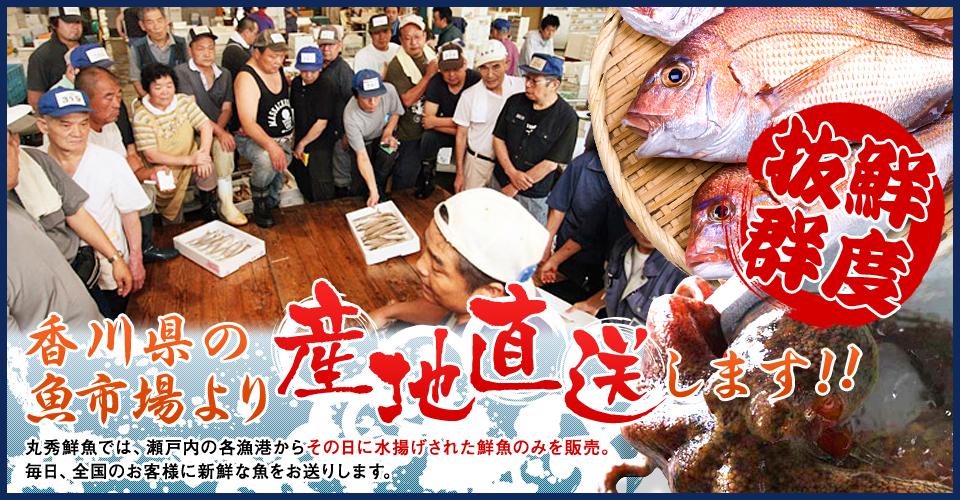 鮮度抜群 香川県の魚市場より産地直送します!!